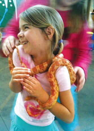 fidi-kalampokiou-corn-snake